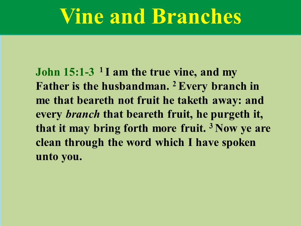 Vine and Branches John 15:1-3 1 I am the true vine, and my Father is the husbandman. 2 Every branch in me that beareth not fruit he taketh away: and e
