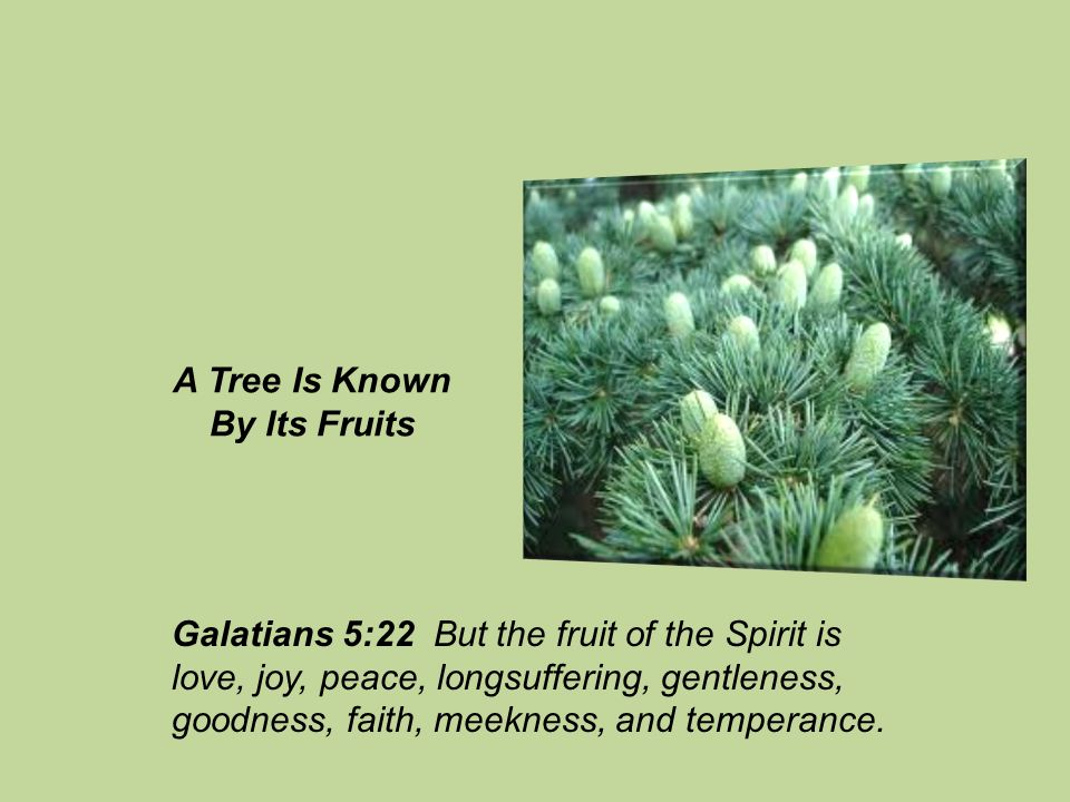 Galatians 5:22 But the fruit of the Spirit is love, joy, peace, longsuffering, gentleness, goodness, faith, meekness, and temperance.