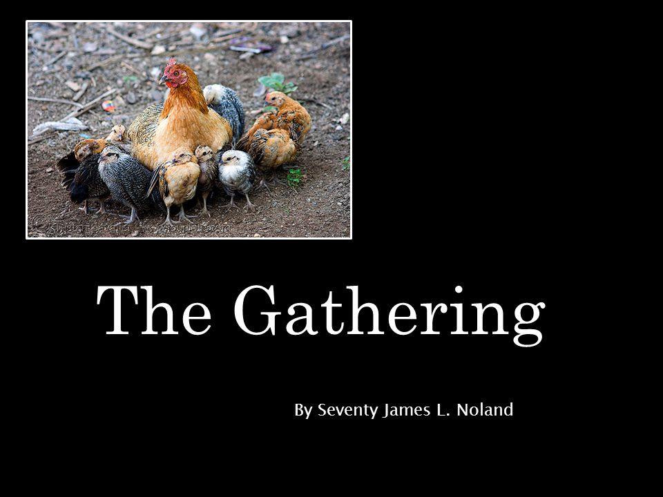 The Gathering By Seventy James L. Noland