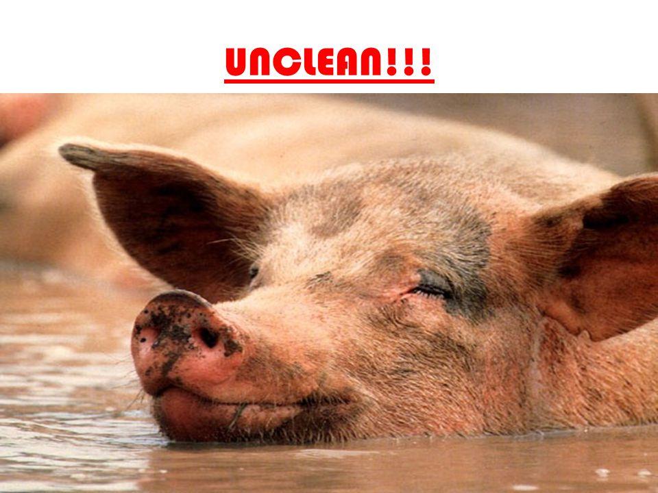 UNCLEAN!!!