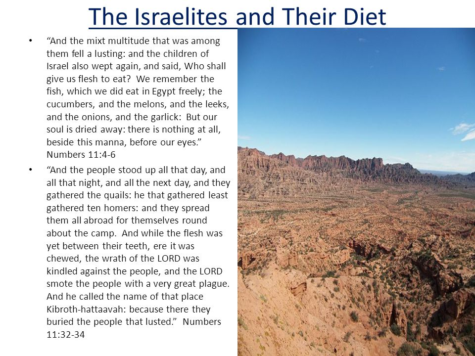 The Israelites and Their Diet And the mixt multitude that was among them fell a lusting: and the children of Israel also wept again, and said, Who shall give us flesh to eat.