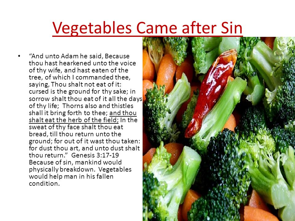 Vegetables Came after Sin And unto Adam he said, Because thou hast hearkened unto the voice of thy wife, and hast eaten of the tree, of which I commanded thee, saying, Thou shalt not eat of it: cursed is the ground for thy sake; in sorrow shalt thou eat of it all the days of thy life; Thorns also and thistles shall it bring forth to thee; and thou shalt eat the herb of the field; In the sweat of thy face shalt thou eat bread, till thou return unto the ground; for out of it wast thou taken: for dust thou art, and unto dust shalt thou return. Genesis 3:17-19 Because of sin, mankind would physically breakdown.