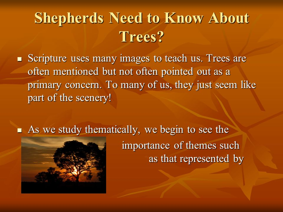 Did you notice something about these trees.They had TWO things in common: 1.