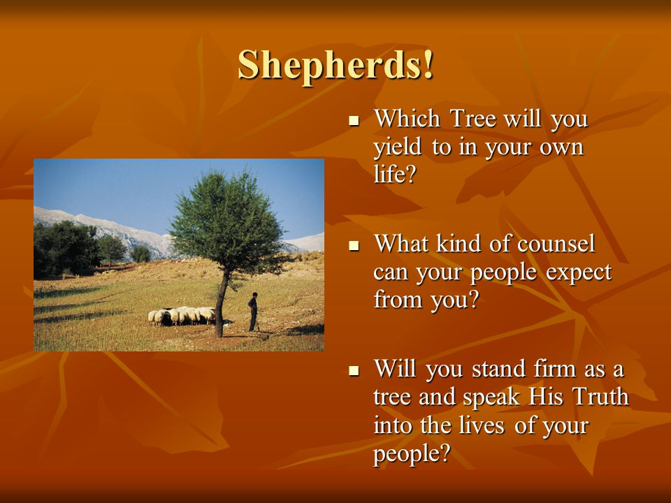 Shepherds! Which Tree will you yield to in your own life? Which Tree will you yield to in your own life? What kind of counsel can your people expect f