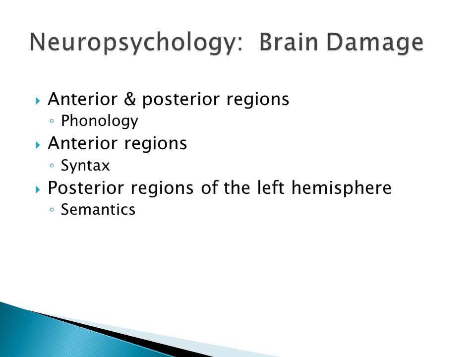  Anterior & posterior regions ◦ Phonology  Anterior regions ◦ Syntax  Posterior regions of the left hemisphere ◦ Semantics