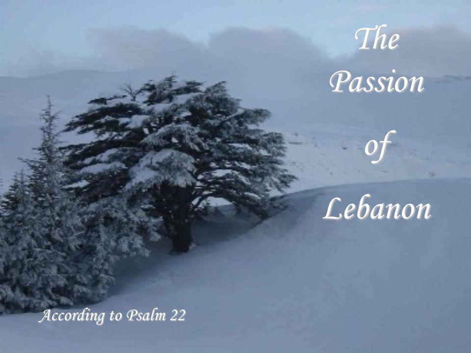 The Passion ofLebanon According to Psalm 22