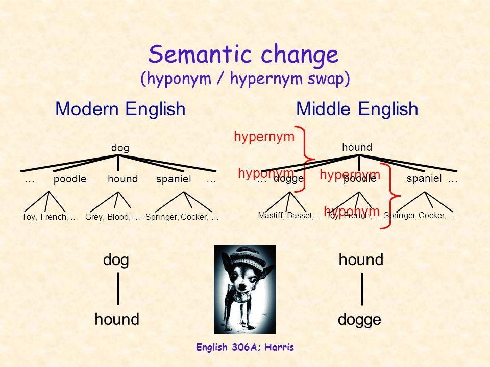 English 306A; Harris Semantic change (hyponym / hypernym swap) dog … poodle hound spaniel … Toy, French, … Grey, Blood, … Springer, Cocker, … hyponym hypernym hyponym hypernym