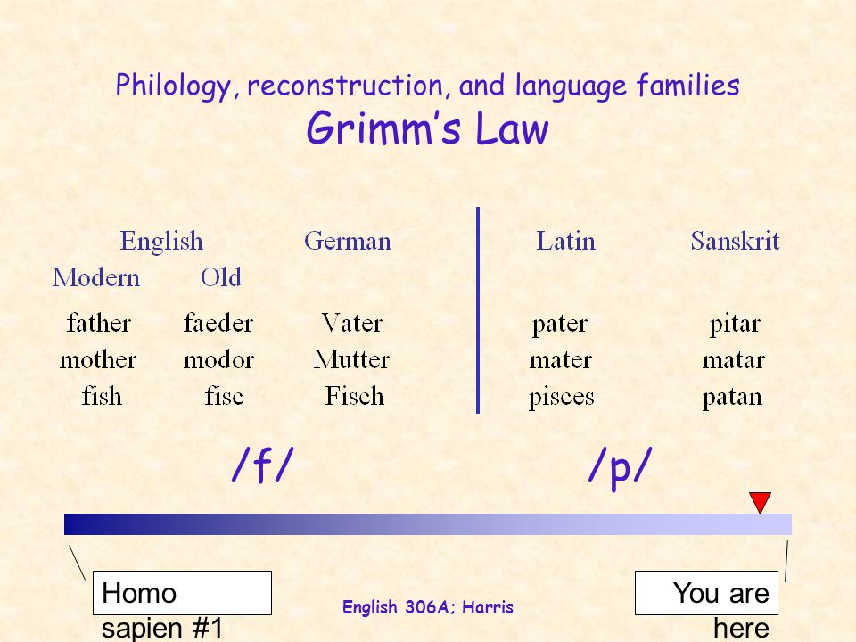 English 306A; Harris Philology, reconstruction, and language families Grimm's Law Homo sapien #1 You are here