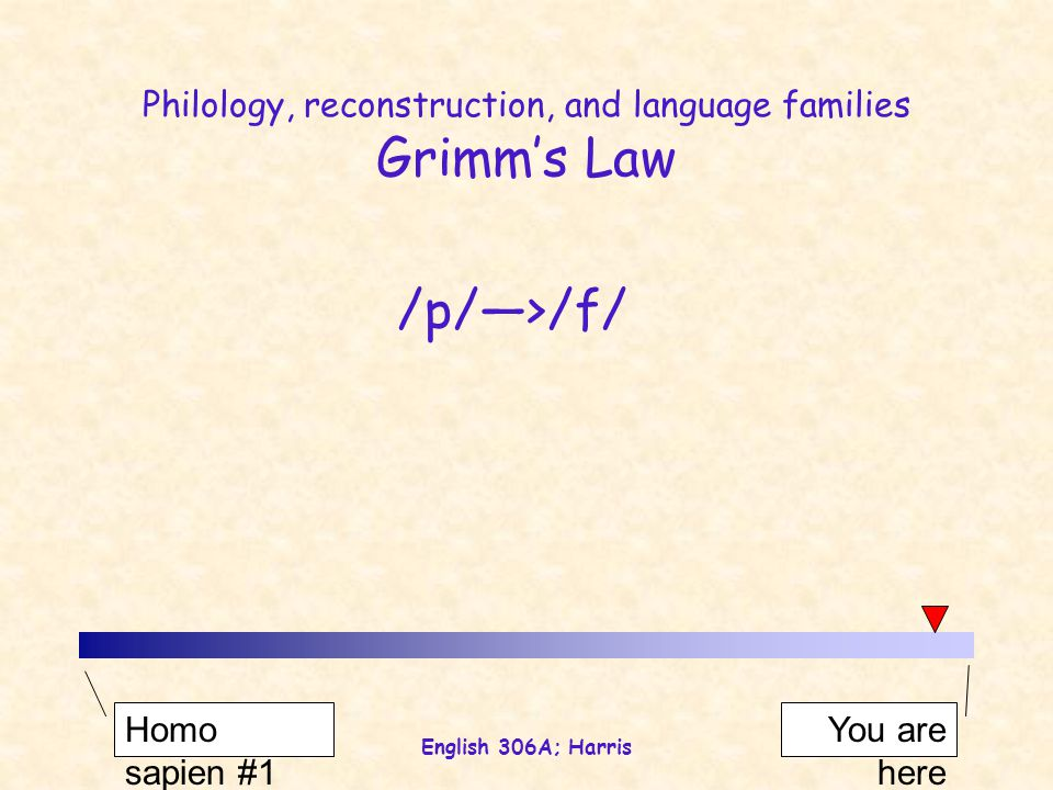 English 306A; Harris Philology, reconstruction, and language families Grimm's Law /p//f/ Homo sapien #1 You are here