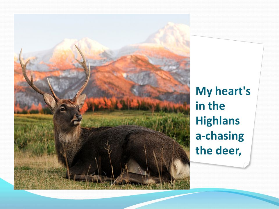 My heart s in the Highlans a-chasing the deer,