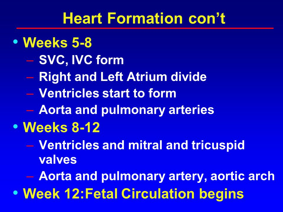 Heart Formation Heart structures form completely by week 12 Week 3-4: Vitelline Stage –Heart tube forms – Looping occurs –Venous system starts to form Week 5 –Placenta provides nutrients and liver takes of hematopoeis