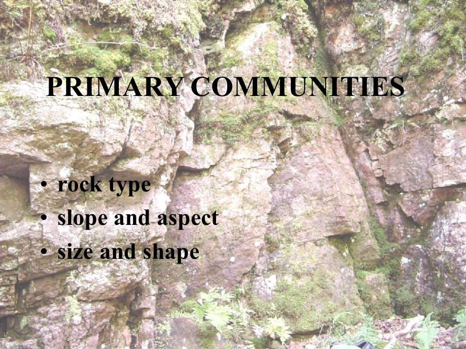 PRIMARY COMMUNITIES rock type slope and aspect size and shape