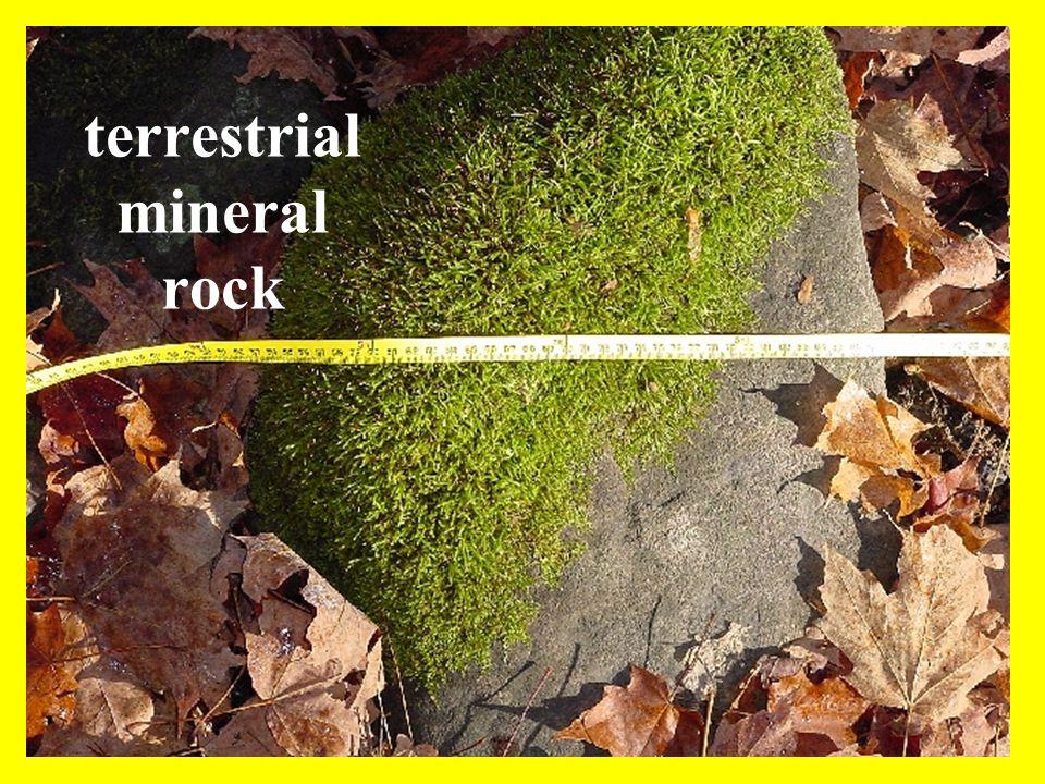 terrestrial mineral rock