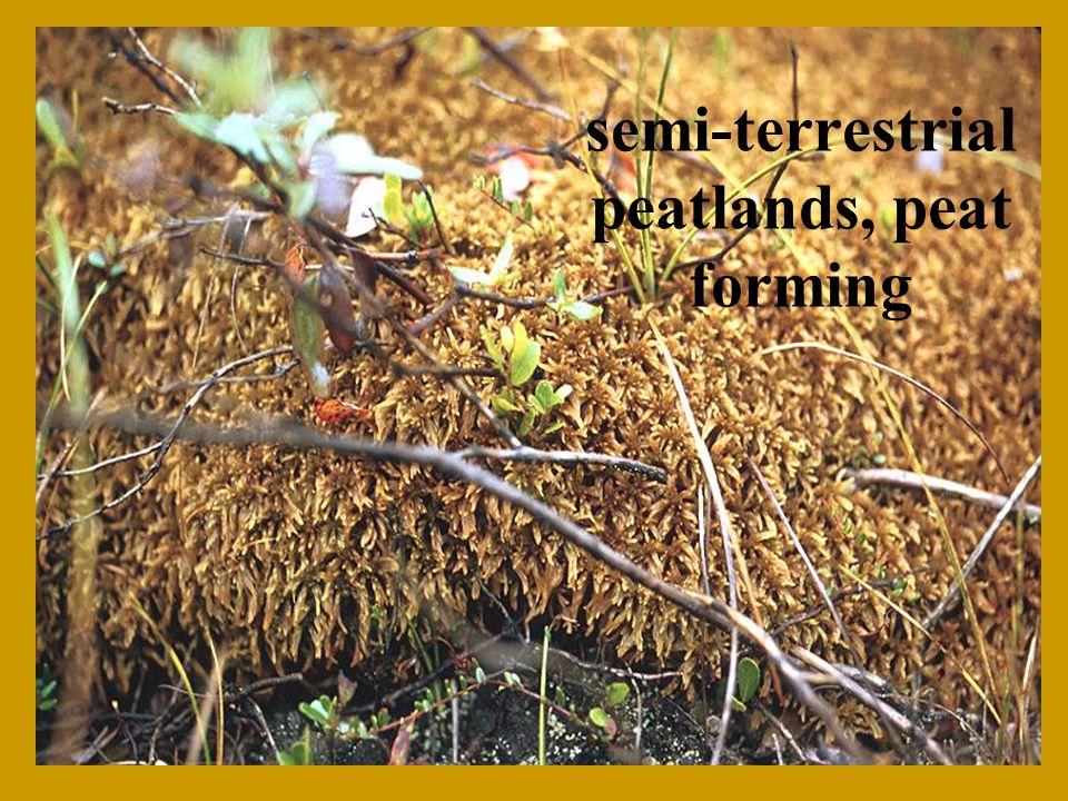 semi-terrestrial peatlands, peat forming