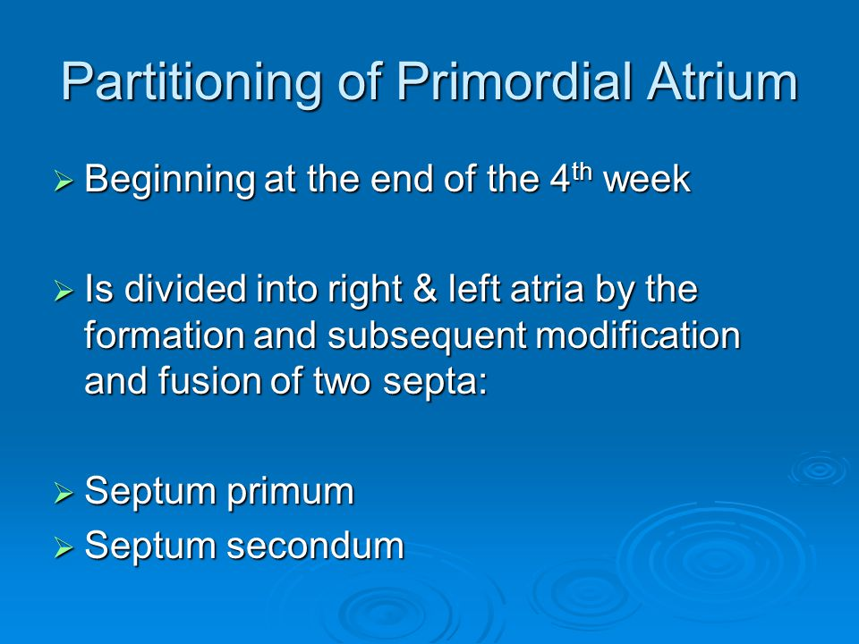 Partitioning of Primordial Atrium  Beginning at the end of the 4 th week  Is divided into right & left atria by the formation and subsequent modific