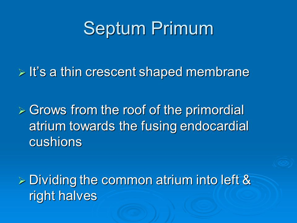 Septum Primum  It's a thin crescent shaped membrane  Grows from the roof of the primordial atrium towards the fusing endocardial cushions  Dividing