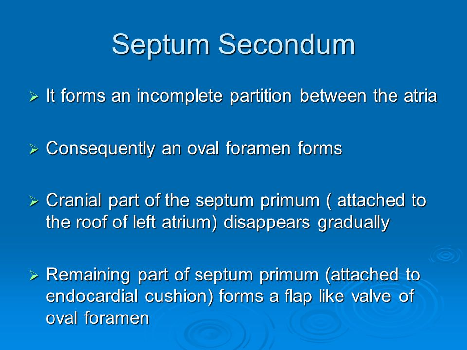 Septum Secondum  It forms an incomplete partition between the atria  Consequently an oval foramen forms  Cranial part of the septum primum ( attach