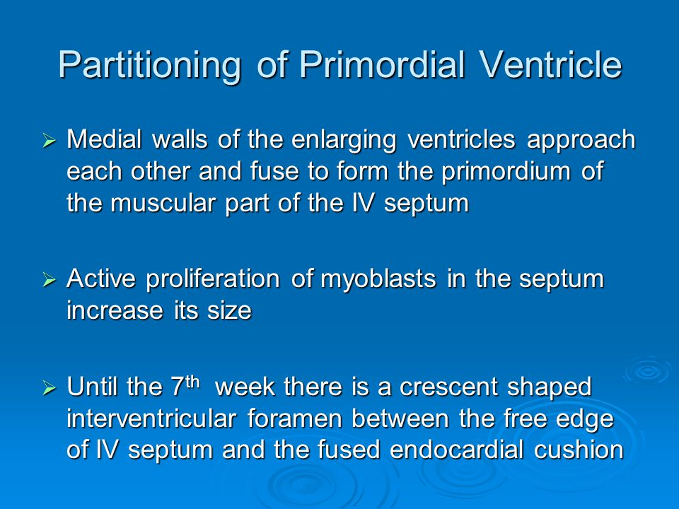 Partitioning of Primordial Ventricle  Medial walls of the enlarging ventricles approach each other and fuse to form the primordium of the muscular pa
