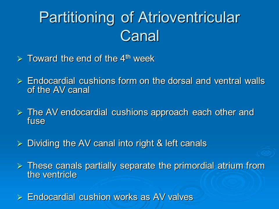 Partitioning of Atrioventricular Canal  Toward the end of the 4 th week  Endocardial cushions form on the dorsal and ventral walls of the AV canal 