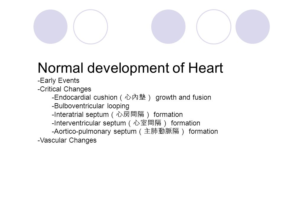 Normal development of Heart -Early Events -Critical Changes -Endocardial cushion (心內墊) growth and fusion -Bulboventricular looping -Interatrial septum