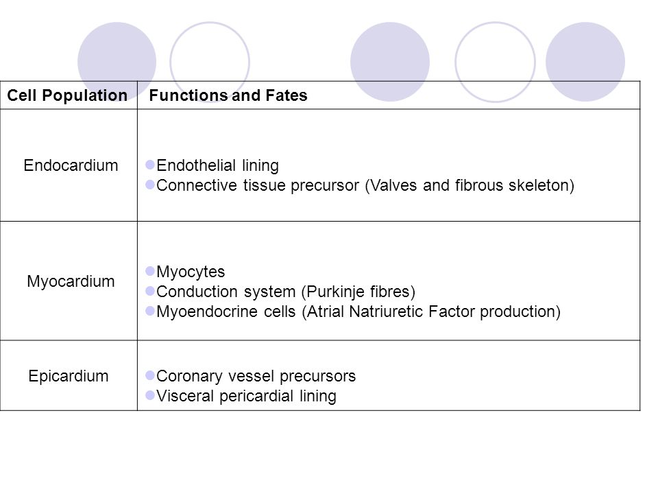 Cell Population Functions and Fates Endocardium Endothelial lining Connective tissue precursor (Valves and fibrous skeleton) Myocardium Myocytes Condu