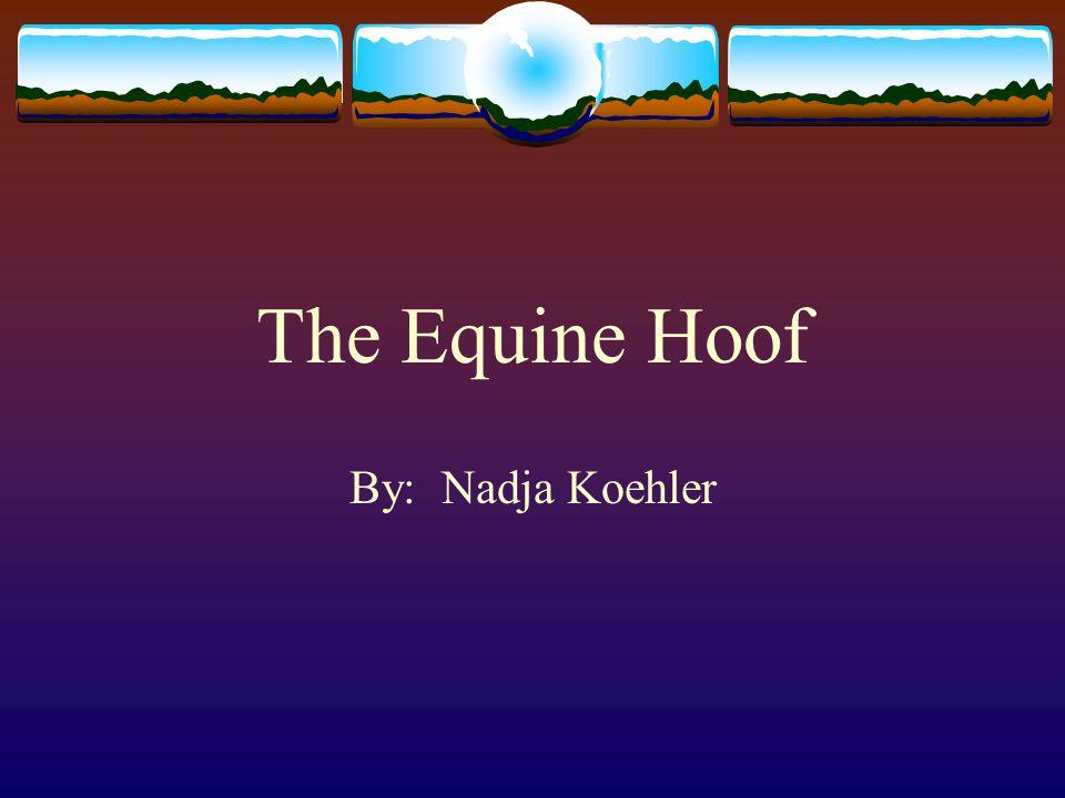The Equine Hoof By: Nadja Koehler