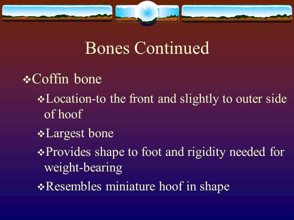 Bones Continued  Coffin bone  Location-to the front and slightly to outer side of hoof  Largest bone  Provides shape to foot and rigidity needed f