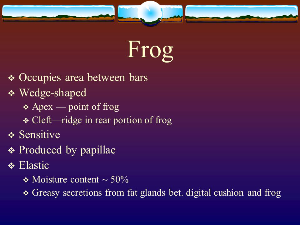 Frog  Occupies area between bars  Wedge-shaped  Apex — point of frog  Cleft—ridge in rear portion of frog  Sensitive  Produced by papillae  Ela