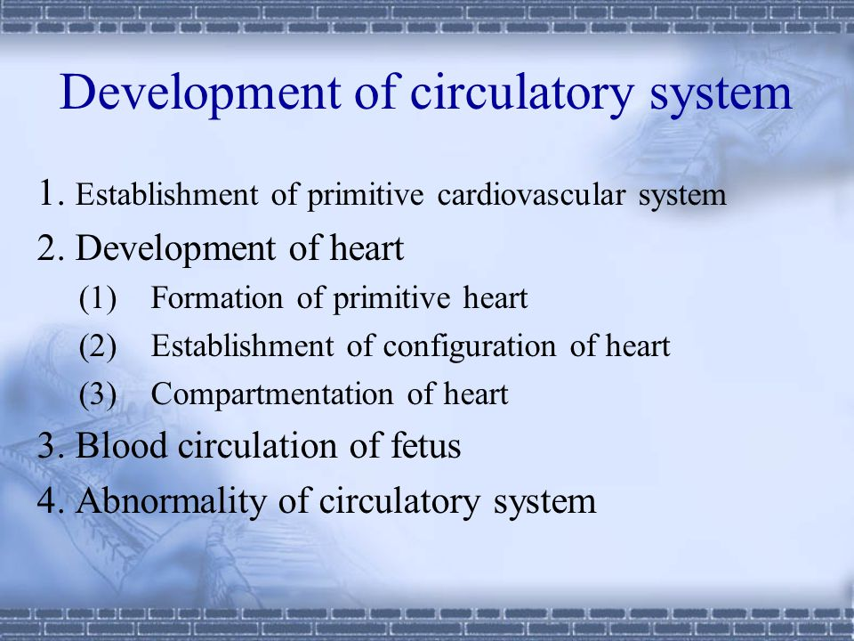 Development of circulatory system 1.Establishment of primitive cardiovascular system 2.