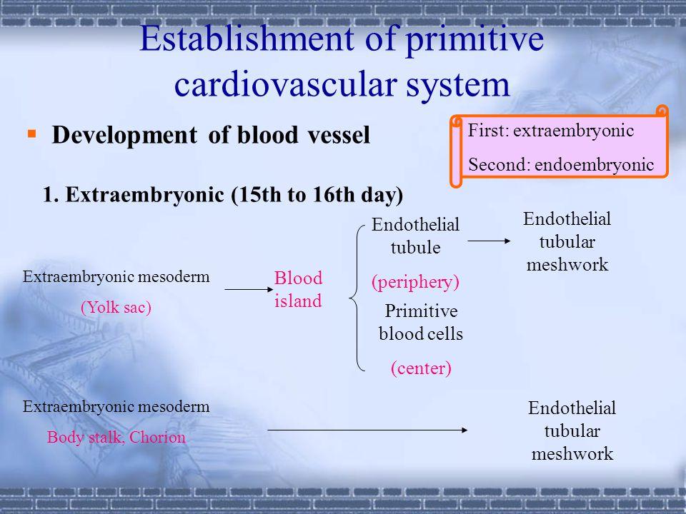 Development of heart (6th week) Bulbar ridge