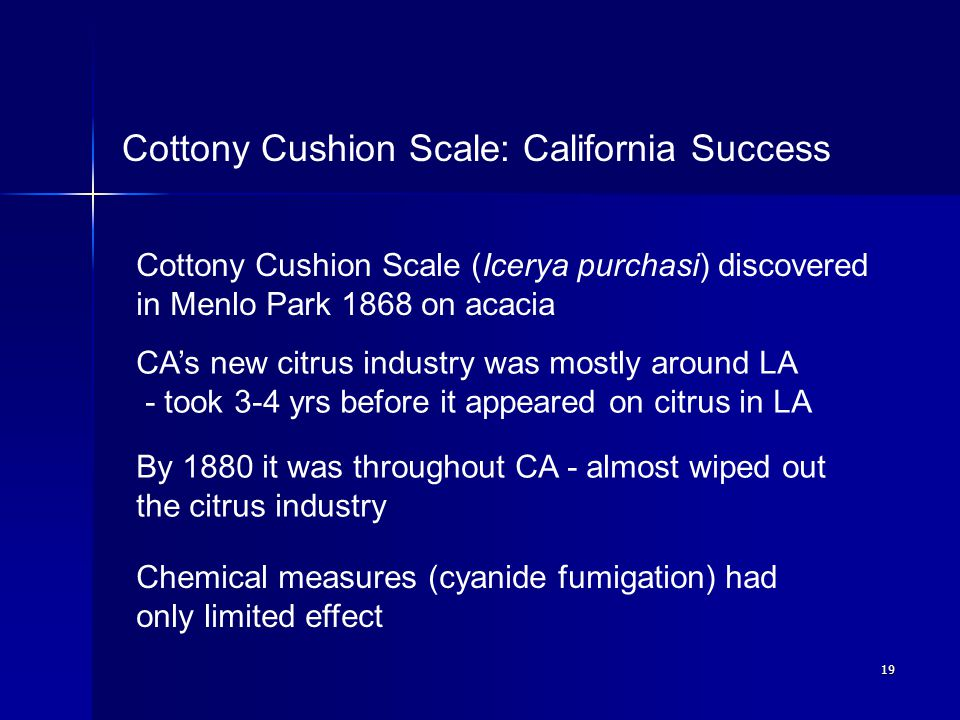 19 Cottony Cushion Scale: California Success Cottony Cushion Scale (Icerya purchasi) discovered in Menlo Park 1868 on acacia CA's new citrus industry was mostly around LA - took 3-4 yrs before it appeared on citrus in LA By 1880 it was throughout CA - almost wiped out the citrus industry Chemical measures (cyanide fumigation) had only limited effect