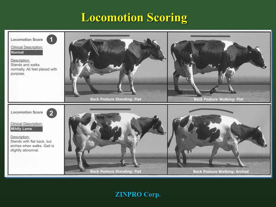 Locomotion Scoring ZINPRO Corp.