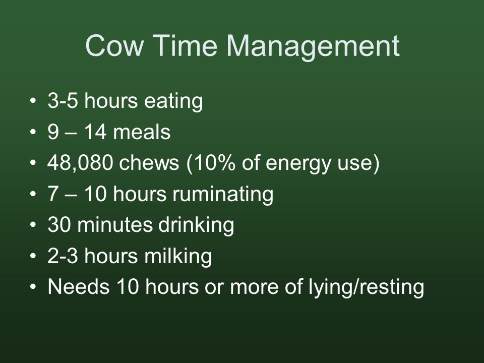 Cow Time Management 3-5 hours eating 9 – 14 meals 48,080 chews (10% of energy use) 7 – 10 hours ruminating 30 minutes drinking 2-3 hours milking Needs 10 hours or more of lying/resting