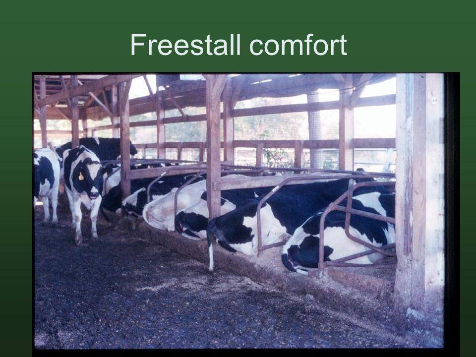 Freestall comfort