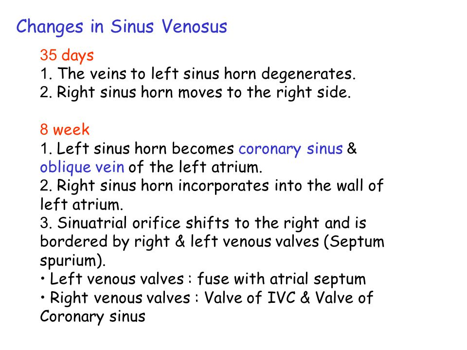 Development of Venous Valves 35 days (7- to 8- mm) 1. Septum spurium = fusion of Rt. & Lt. venous valves. 2. Sup. portion of Rt. venous valve disappea