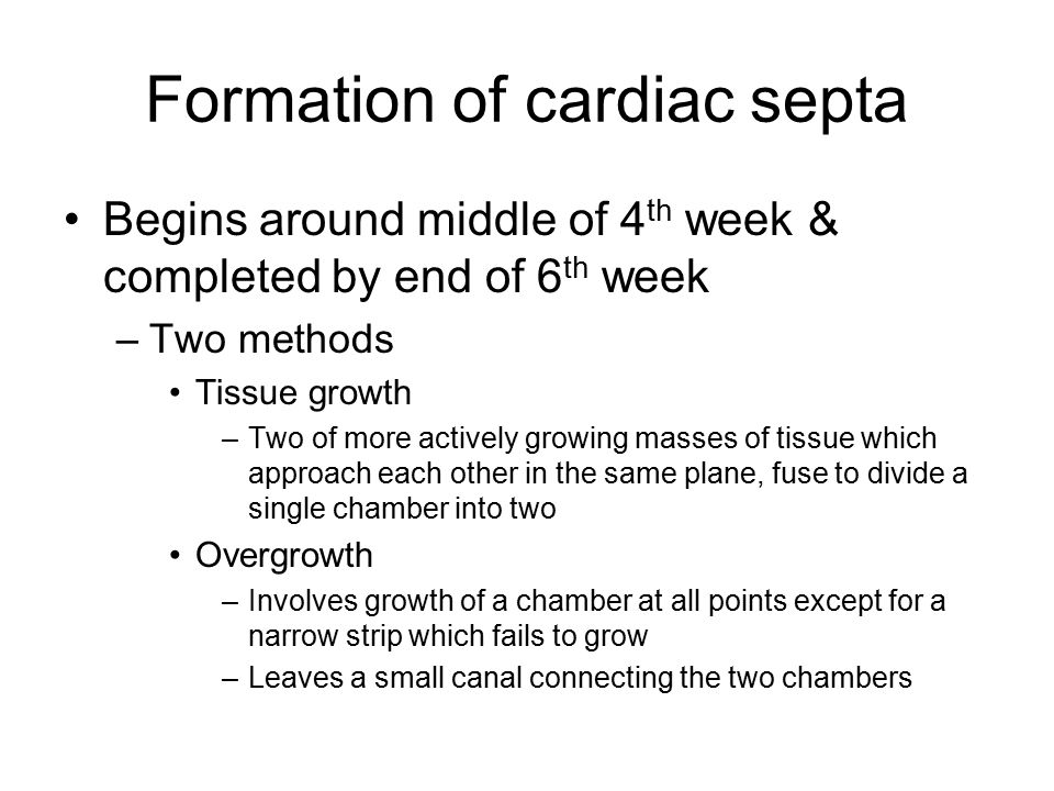 Formation of cardiac septa Begins around middle of 4 th week & completed by end of 6 th week –Two methods Tissue growth –Two of more actively growing