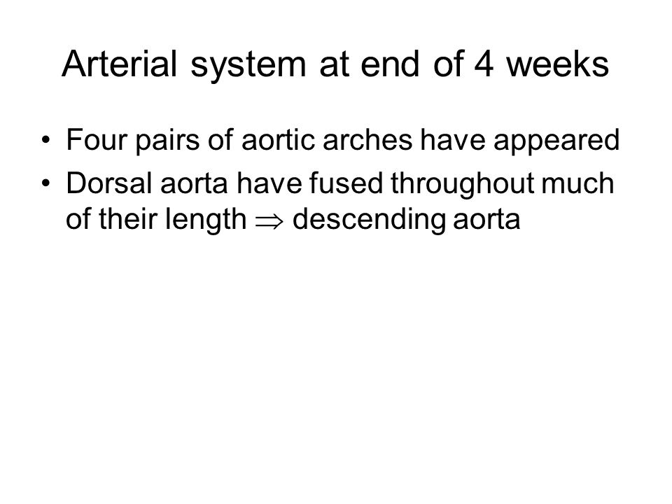 Arterial system at end of 4 weeks Four pairs of aortic arches have appeared Dorsal aorta have fused throughout much of their length  descending aorta