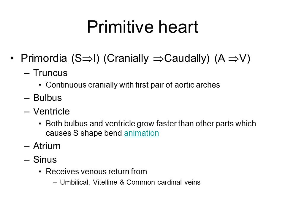 Primitive heart Primordia (S  I) (Cranially  Caudally) (A  V) –Truncus Continuous cranially with first pair of aortic arches –Bulbus –Ventricle Bot