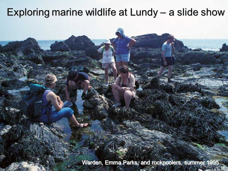 Warden, Emma Parks, and rockpoolers, summer 1995 Exploring marine wildlife at Lundy – a slide show