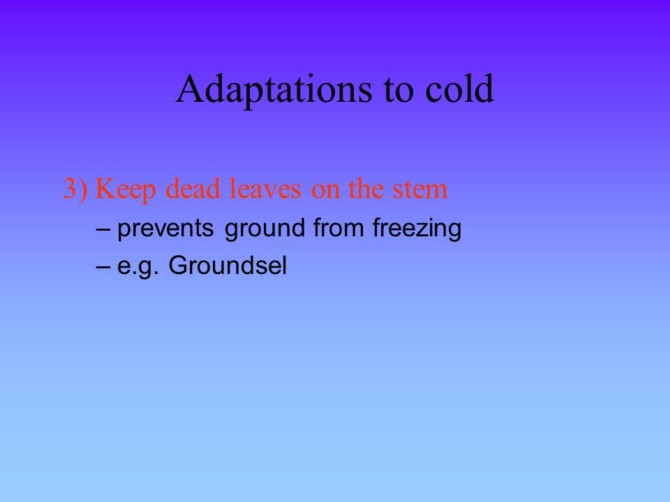 Adaptations to cold 3) Keep dead leaves on the stem –prevents ground from freezing –e.g. Groundsel