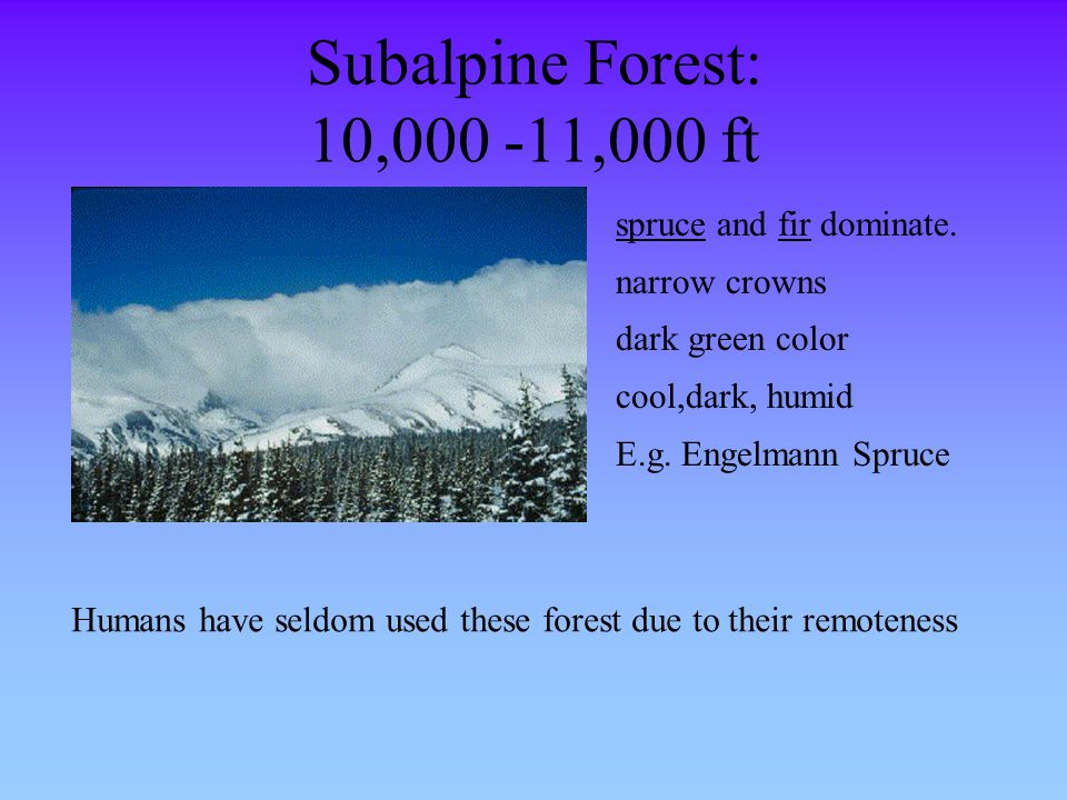 Subalpine Forest: 10,000 -11,000 ft spruce and fir dominate. narrow crowns dark green color cool,dark, humid E.g. Engelmann Spruce Humans have seldom
