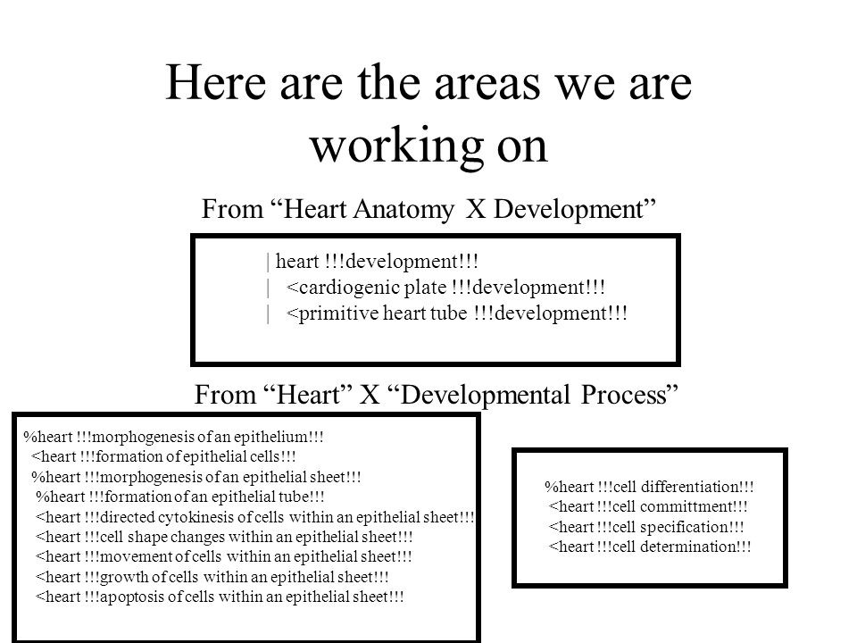 Here are the areas we are working on From Heart Anatomy X Development | heart !!!development!!.