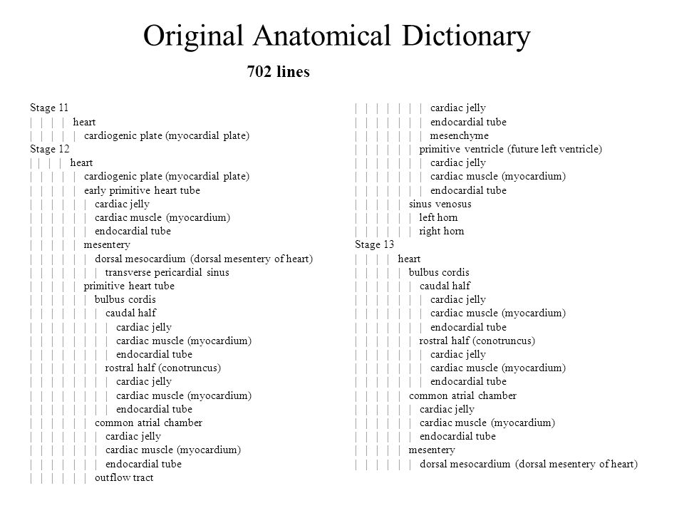 Original Anatomical Dictionary Stage 11 | | | | heart | | | | | cardiogenic plate (myocardial plate) Stage 12 | | | | heart | | | | | cardiogenic plate (myocardial plate) | | | | | early primitive heart tube | | | | | | cardiac jelly | | | | | | cardiac muscle (myocardium) | | | | | | endocardial tube | | | | | mesentery | | | | | | dorsal mesocardium (dorsal mesentery of heart) | | | | | | | transverse pericardial sinus | | | | | primitive heart tube | | | | | | bulbus cordis | | | | | | | caudal half | | | | | | | | cardiac jelly | | | | | | | | cardiac muscle (myocardium) | | | | | | | | endocardial tube | | | | | | | rostral half (conotruncus) | | | | | | | | cardiac jelly | | | | | | | | cardiac muscle (myocardium) | | | | | | | | endocardial tube | | | | | | common atrial chamber | | | | | | | cardiac jelly | | | | | | | cardiac muscle (myocardium) | | | | | | | endocardial tube | | | | | | outflow tract | | | | | | | cardiac jelly | | | | | | | endocardial tube | | | | | | | mesenchyme | | | | | | primitive ventricle (future left ventricle) | | | | | | | cardiac jelly | | | | | | | cardiac muscle (myocardium) | | | | | | | endocardial tube | | | | | sinus venosus | | | | | | left horn | | | | | | right horn Stage 13 | | | | heart | | | | | bulbus cordis | | | | | | caudal half | | | | | | | cardiac jelly | | | | | | | cardiac muscle (myocardium) | | | | | | | endocardial tube | | | | | | rostral half (conotruncus) | | | | | | | cardiac jelly | | | | | | | cardiac muscle (myocardium) | | | | | | | endocardial tube | | | | | common atrial chamber | | | | | | cardiac jelly | | | | | | cardiac muscle (myocardium) | | | | | | endocardial tube | | | | | mesentery | | | | | | dorsal mesocardium (dorsal mesentery of heart) 702 lines
