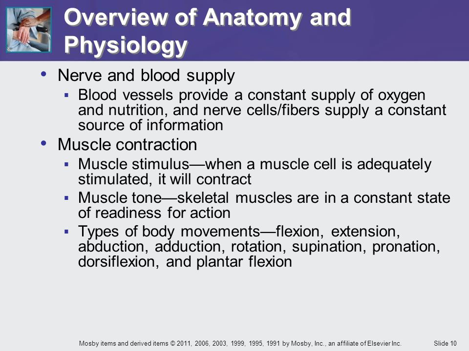 Slide 10Mosby items and derived items © 2011, 2006, 2003, 1999, 1995, 1991 by Mosby, Inc., an affiliate of Elsevier Inc. Overview of Anatomy and Physi