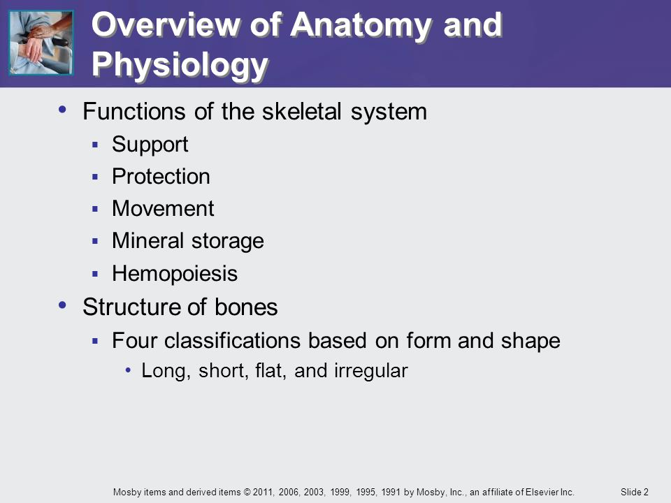 Slide 2Mosby items and derived items © 2011, 2006, 2003, 1999, 1995, 1991 by Mosby, Inc., an affiliate of Elsevier Inc. Overview of Anatomy and Physio