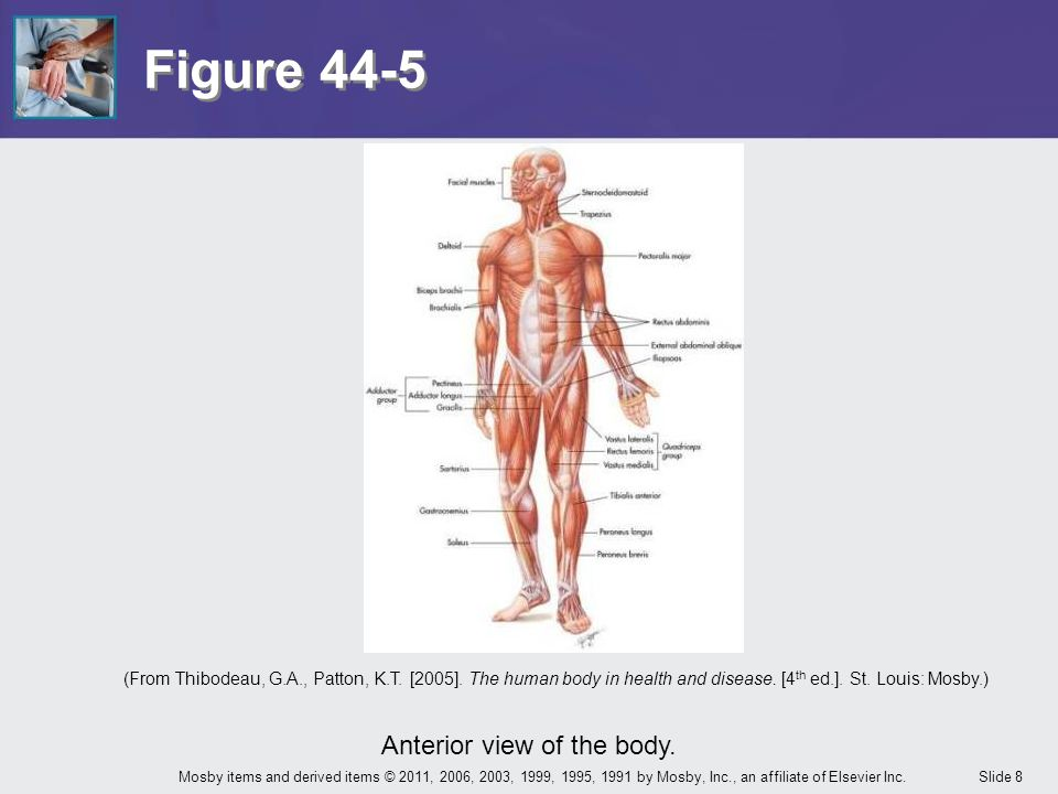 Slide 49Mosby items and derived items © 2011, 2006, 2003, 1999, 1995, 1991 by Mosby, Inc., an affiliate of Elsevier Inc.