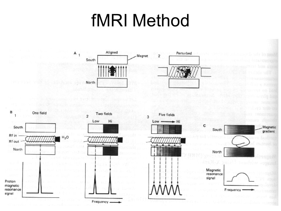 fMRI Method