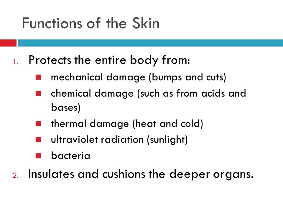 Functions of the Skin 1. Protects the entire body from: mechanical damage (bumps and cuts) chemical damage (such as from acids and bases) thermal dama