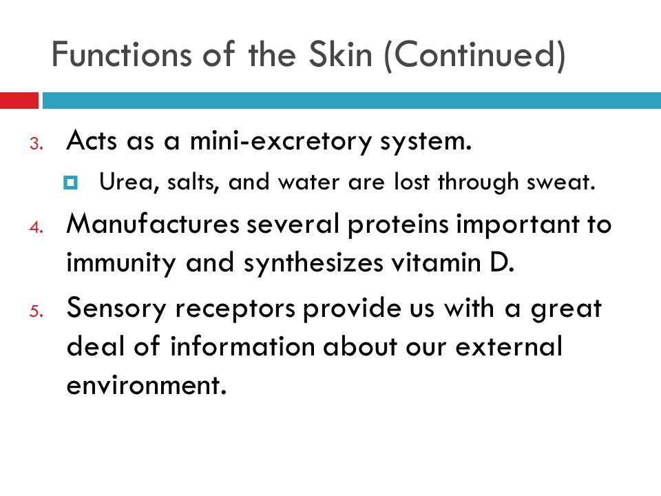 Functions of the Skin (Continued) 3. Acts as a mini-excretory system.  Urea, salts, and water are lost through sweat. 4. Manufactures several protein