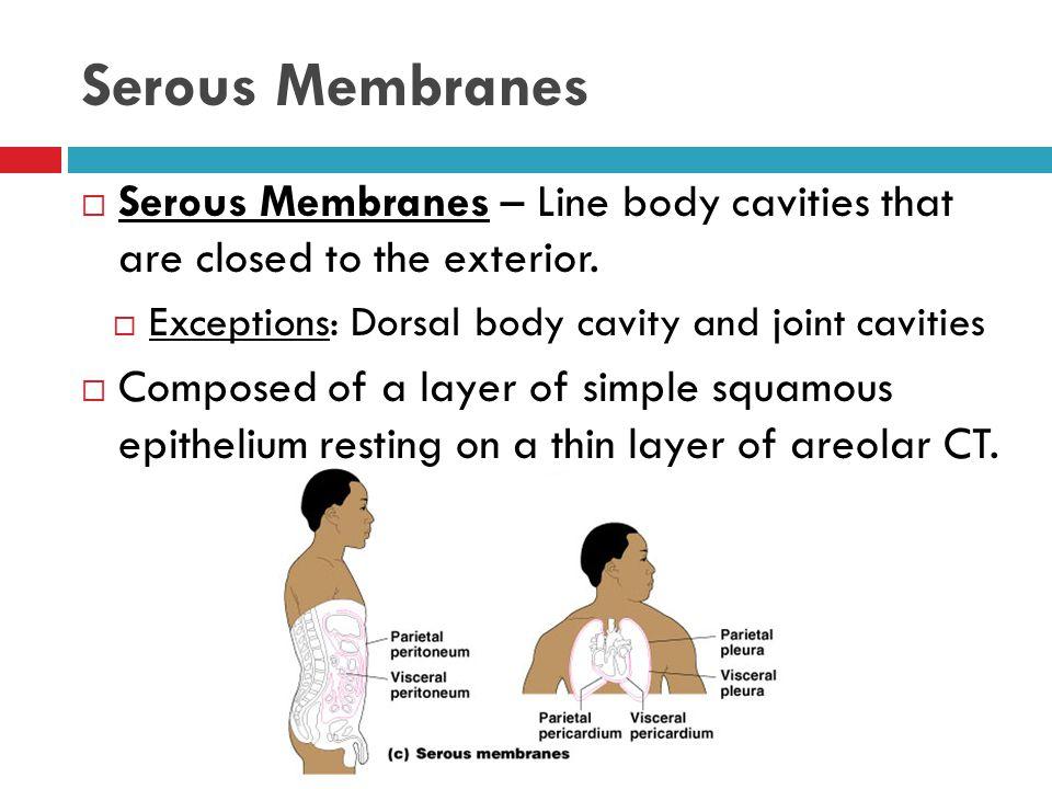 Serous Membranes  Occur in pairs 1.